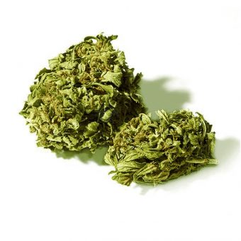 cbditaly-orange-bud